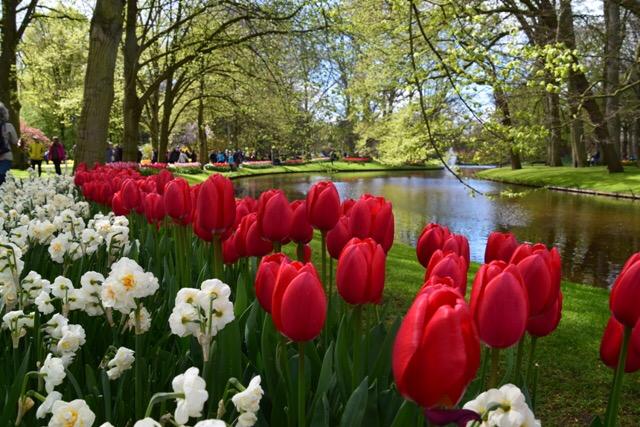 Spring Trip 2015: Keukenhof Garden –Holland