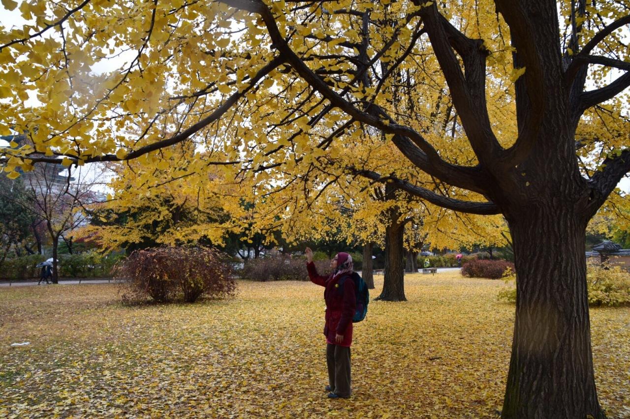 Autumn Trip 2015: Itinerary –Seoul/Jeju