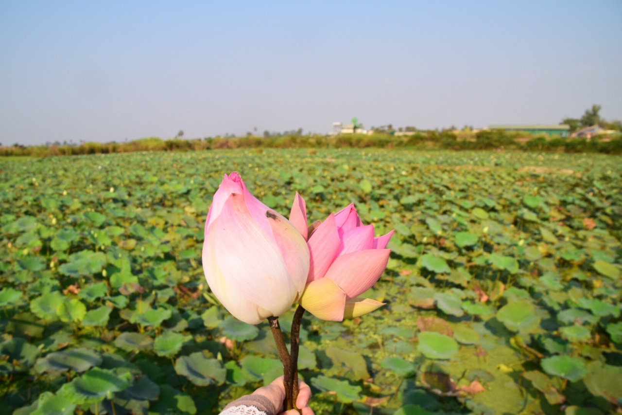 Weekend Gateways: Siem Reap – Lotus Farm