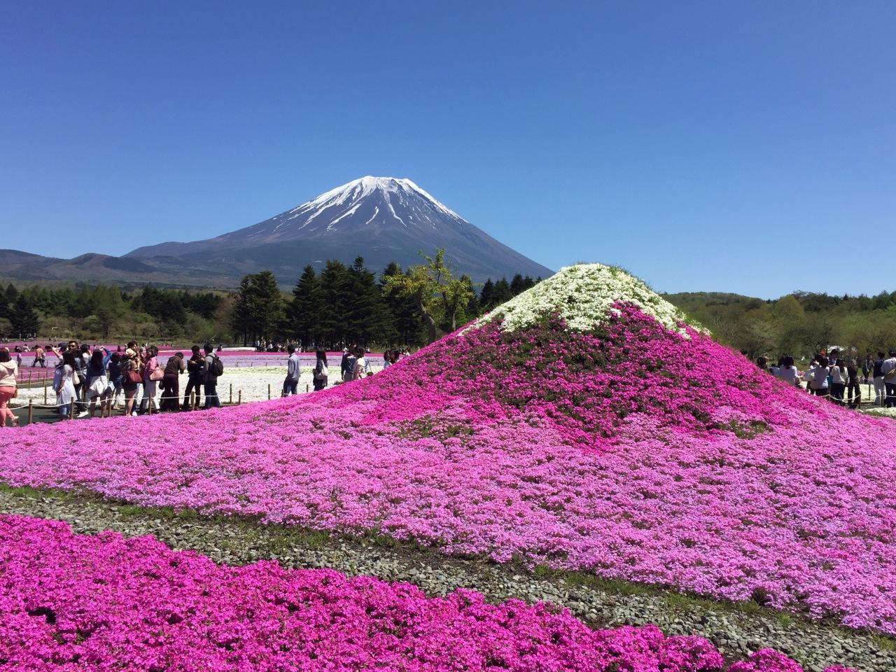 Haru Trip 2016: Fuji ShibazakuraFestival