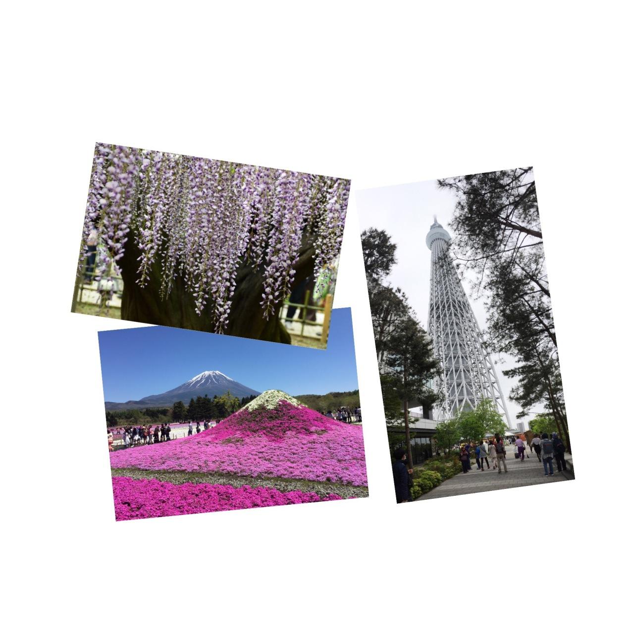 Haru Trip 2016: Itinerary –Tokyo/Fujisan