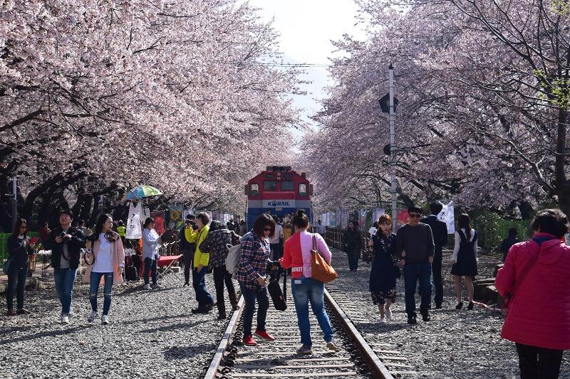 Chasing Cherry Blossom 2017: Korea – Jinhae (Part1)