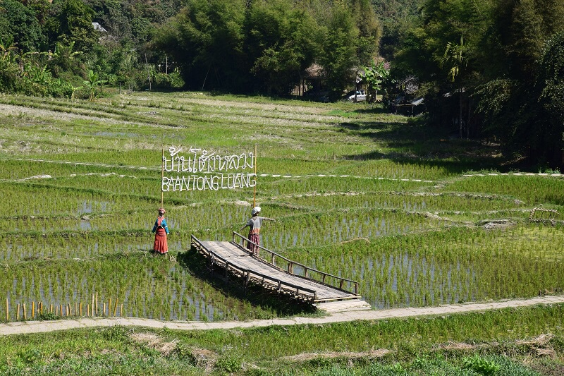 Chiang Mai Trip 2018: Baan Tong LuangVillage