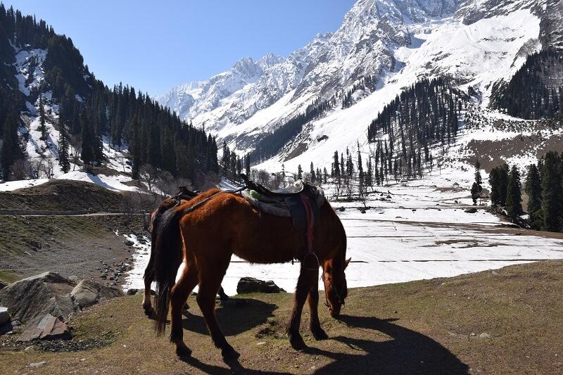 Spring Trip 2018: Kashmir –Sonamarg
