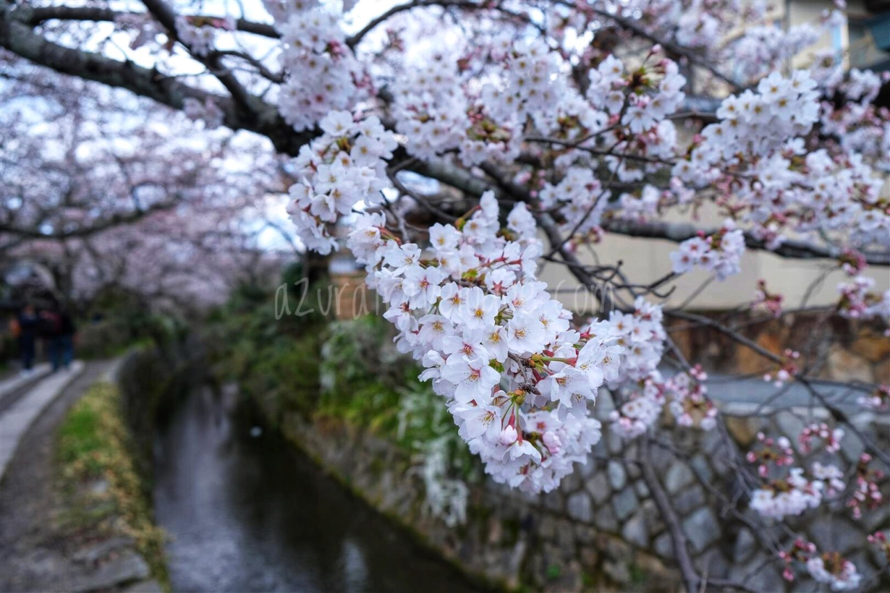 Chasing Sakura 2019: Kyoto – Nanzen-ji & Philosopher's Path