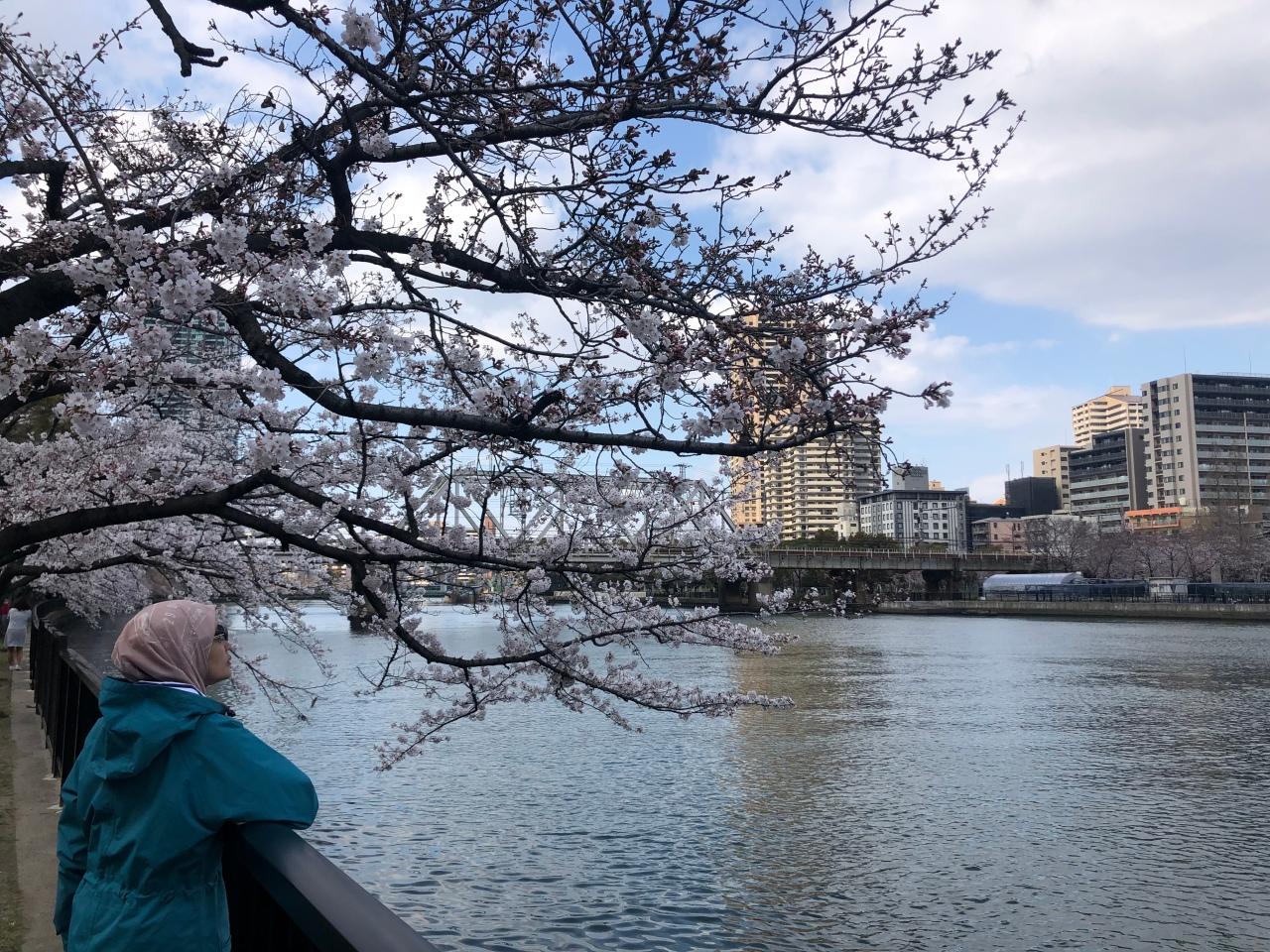Chasing Sakura 2019:Osaka