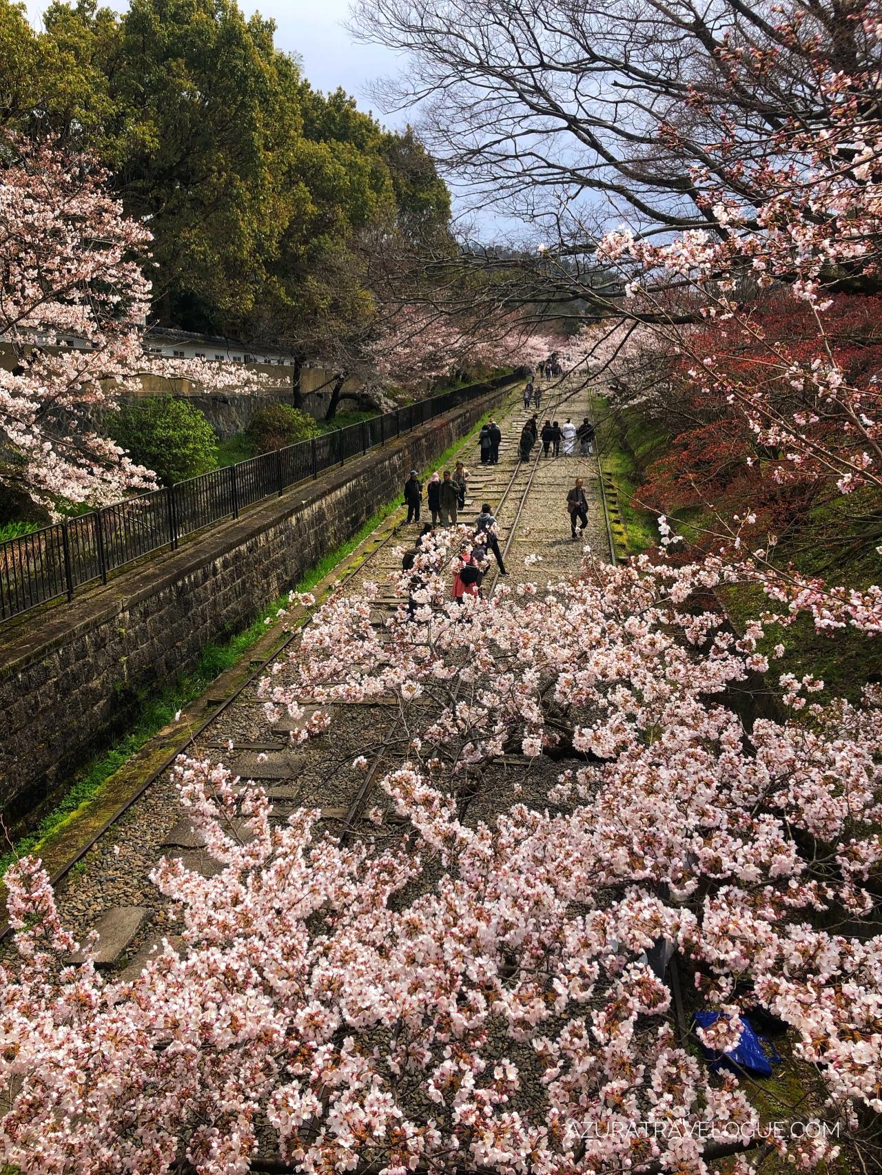 Chasing Sakura 2019: Kyoto – KeageIncline